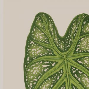 Tropical Leaf Fine Art Print   Flamboyant Invites